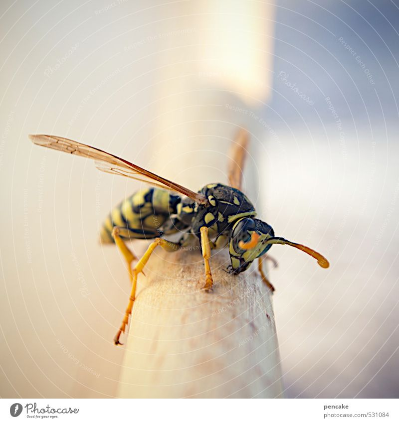 You're stinging hard. Nature Animal 1 Sign Emotions Pierce Pain Wasps Poison Aggression Insect Dangerous Colour photo Exterior shot Macro (Extreme close-up)