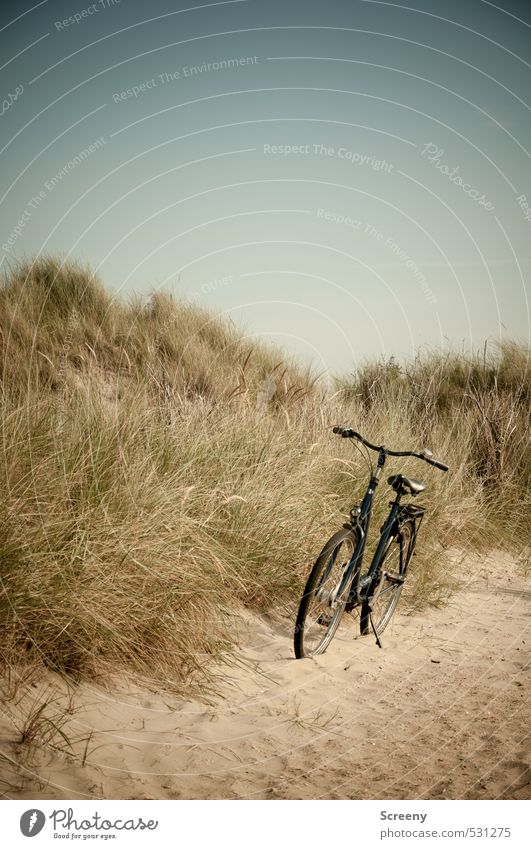 turned off Nature Landscape Plant Earth Cloudless sky Summer Grass Bushes North Sea dunes Beach dune Marram grass Lanes & trails Bicycle Sand Warm-heartedness