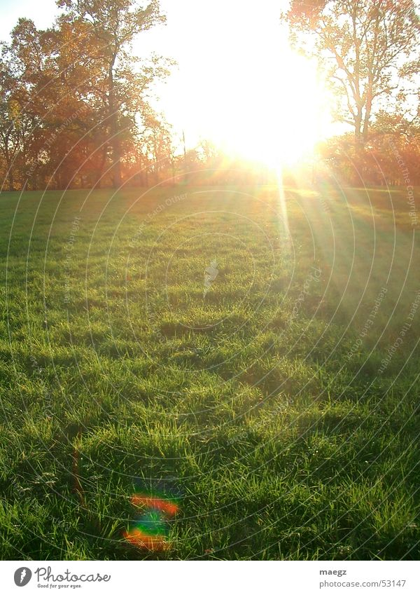 Nature Tree Sun Grass Park Warmth Air Orange Physics Dazzle