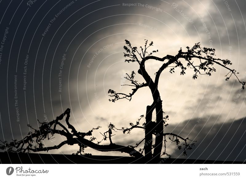Plant | Drama, Baby Environment Nature Sky Storm clouds Sunlight Bad weather Gale Thunder and lightning Tree Leaf Foliage plant Threat Dark Black