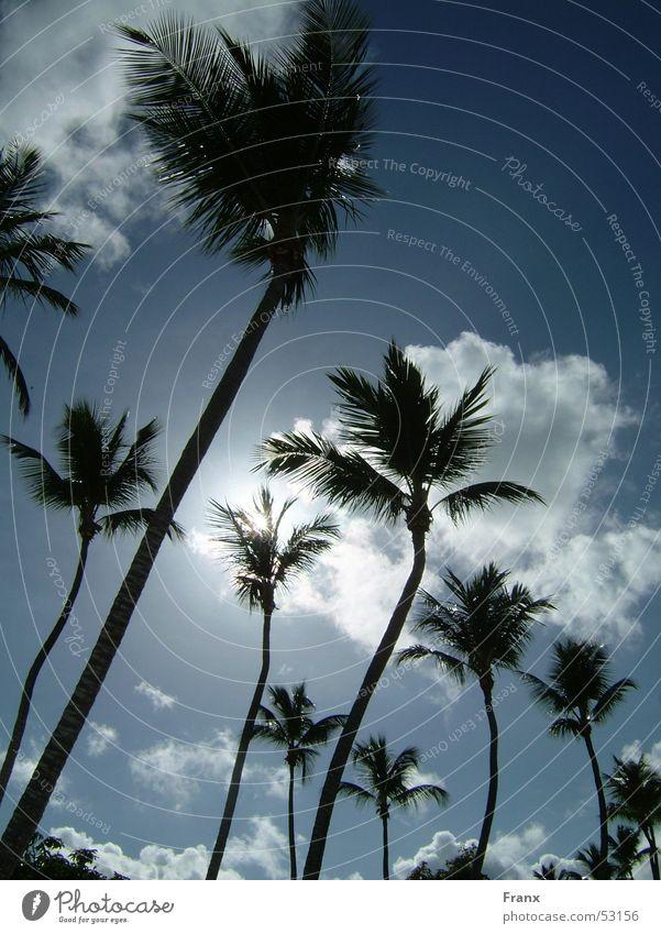 Sky Vacation & Travel Sun Summer Beach Clouds Palm tree Cuba