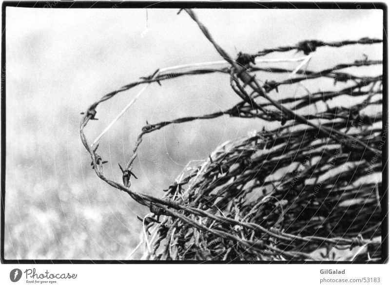 barbed wire Spiekeroog Barbed wire Old Authentic Exceptional Threat Creepy Historic Gloomy Black White Pain Fear Dangerous Wound up Cramped Fence Wire Fenced in