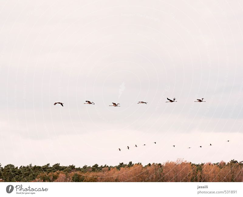 Sky Nature Summer Tree Landscape Emotions Autumn Movement Group Bird Flying Together Speed Beginning Simple Adventure