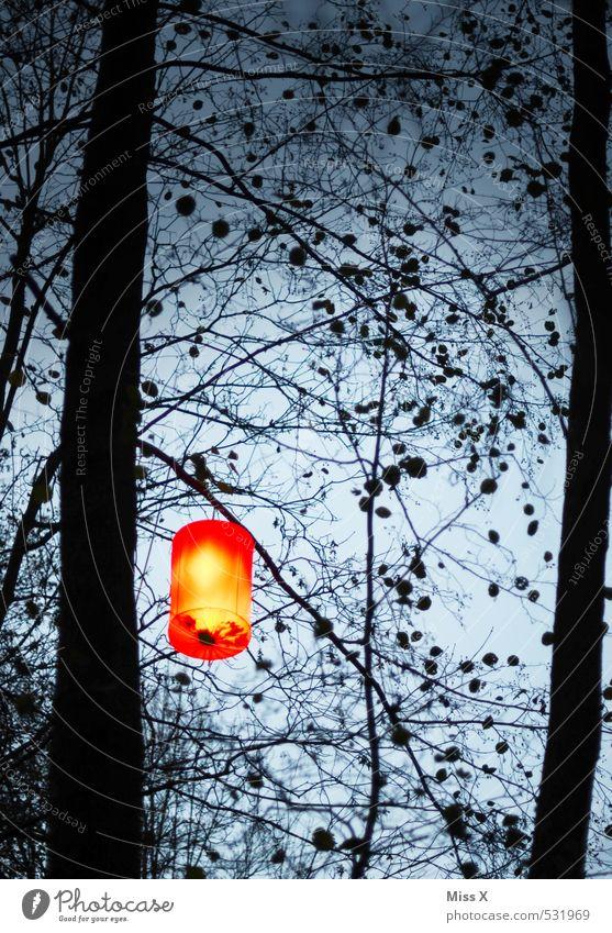 lantern Garden Feasts & Celebrations Hallowe'en Sky Night sky Tree Illuminate Dark Bright Lampion Garden festival Lantern Silhouette Colour photo Exterior shot