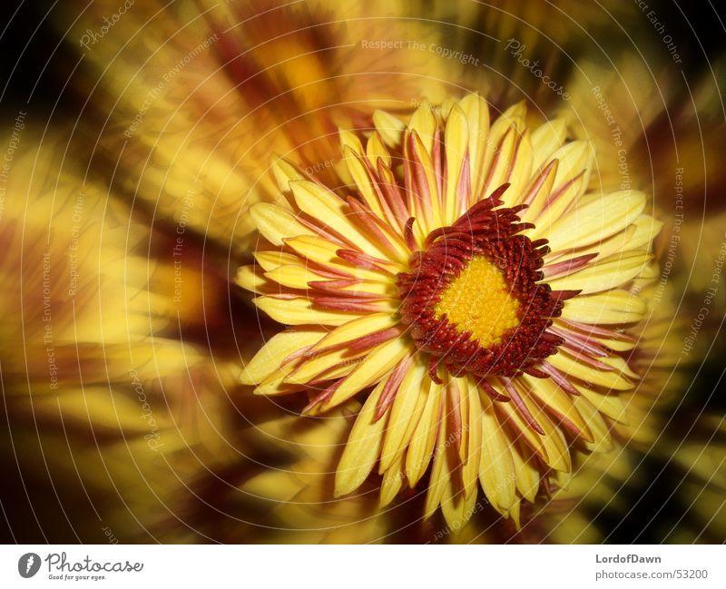 firecracker Blossom Abstract Comic Yellow Red Summer Flower Blur Blaze Flame