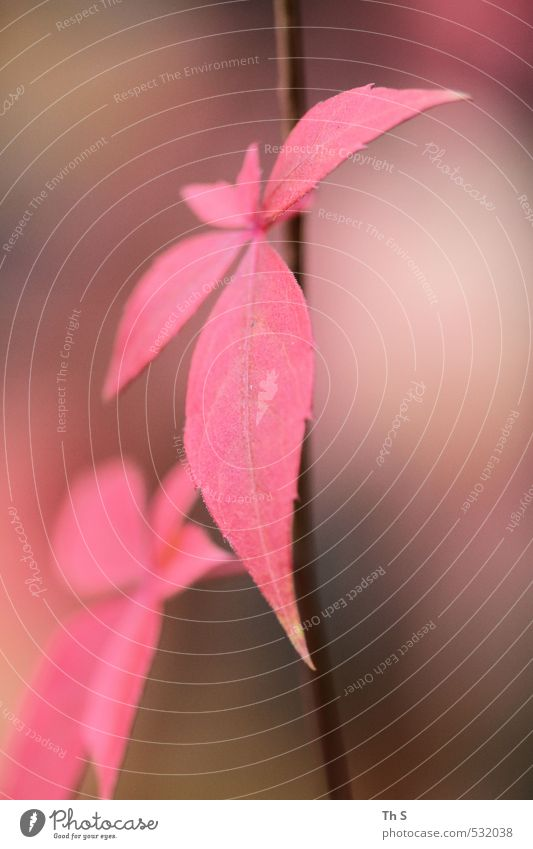 plant Nature Plant Autumn Pink Esthetic Harmonious Colour photo Exterior shot
