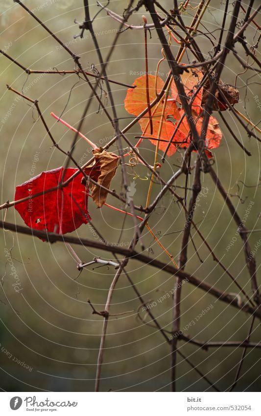 hung along, caught along Environment Nature Plant Autumn Tree Garden Park Life Claustrophobia Stress Communicate Teamwork Decline Transience Irritation Change