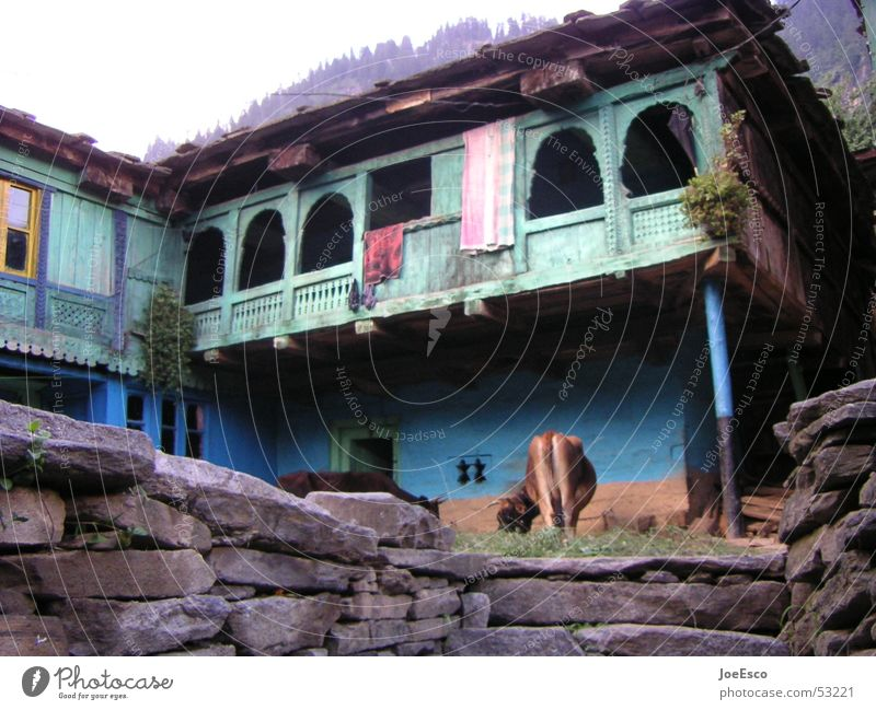 manali cow Calm Vacation & Travel Trip Far-off places House (Residential Structure) Hut Wall (barrier) Wall (building) Hat Wild animal Cow Blue Serene Colour