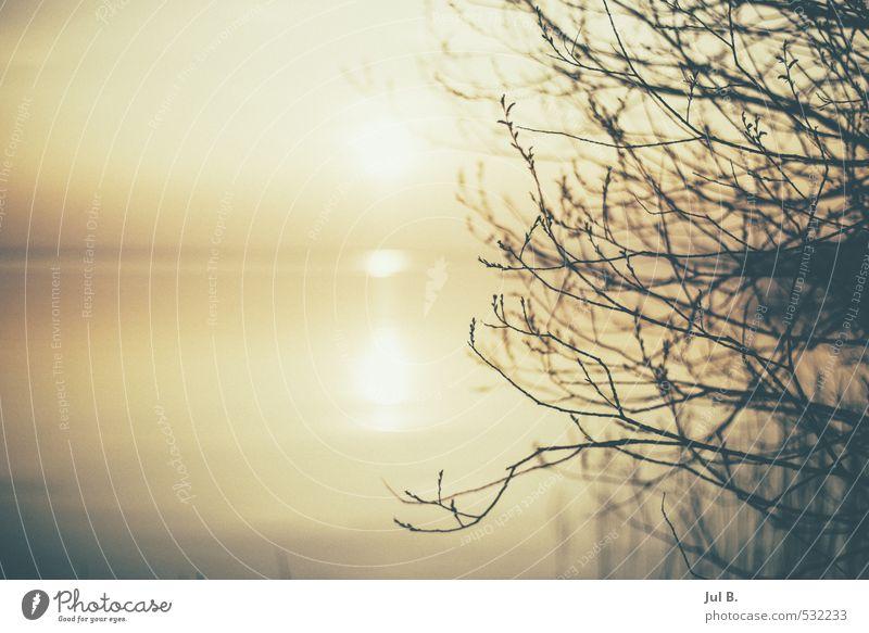 Nature Water Sun Tree Joy Lake Moody Lakeside