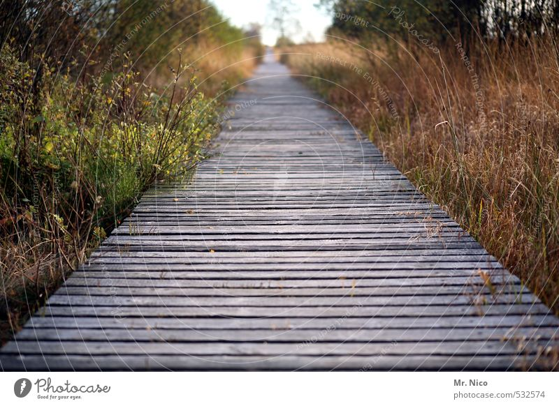 start Vacation & Travel Trip Far-off places Freedom Hiking Environment Nature Landscape Autumn Bushes Moss Bog Marsh Calm Woodway Infinity Right ahead