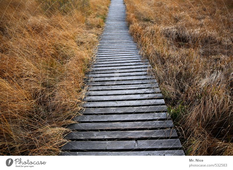 straight ahead Vacation & Travel Trip Far-off places Freedom Hiking Environment Nature Landscape Plant Grass Bog Marsh Idyll Right ahead Loneliness High venn