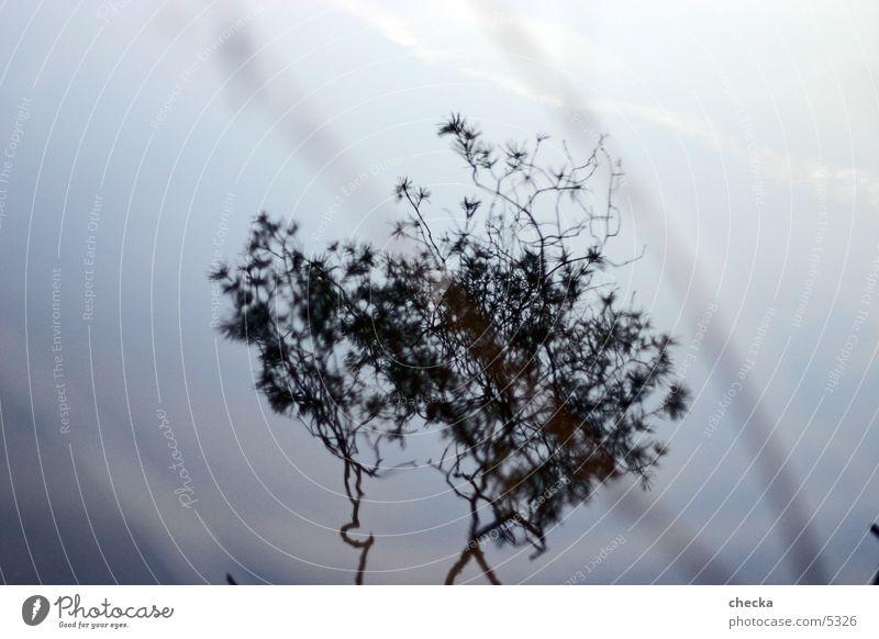mirroring Lake Reflection Plant Tree Water Twig