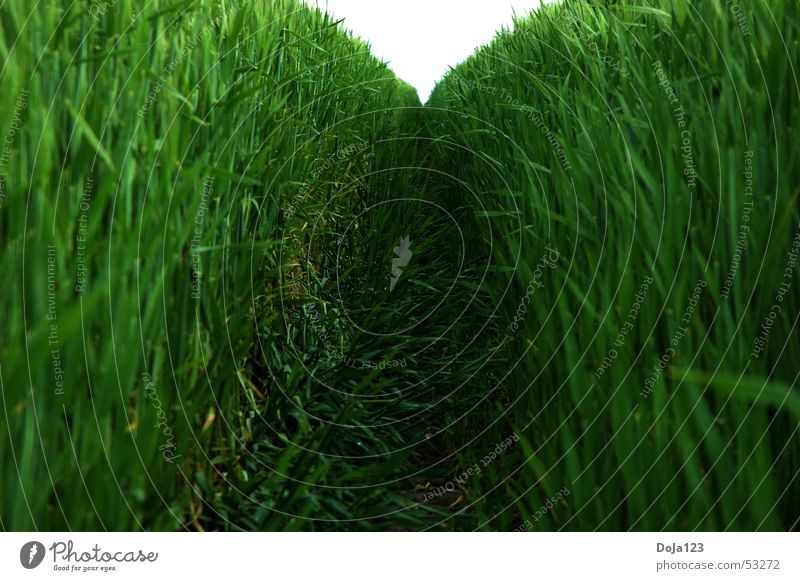 Tunnel view in green Field Forest path Wheat Tunnel vision Horizon Vanishing point Green Leaf Stalk Safe haven Narrow Pester One-sidedness Compulsion Aimless