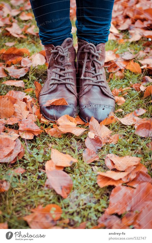 Wet shoes. Feet Fashion Leather Footwear Stand Brown Climate half boots Leaf Autumn Autumn leaves 2 Leather shoes Floor covering Grass Rain Autumnal weather