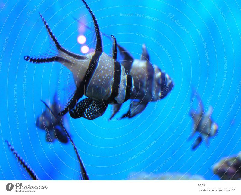 fish Zoom effect Aquarium Fish blue sea Water