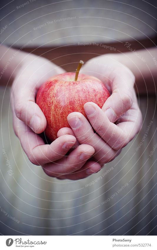 apples, apples... Apple Human being Hand Fingers 1 Bright Cold Retro Brown Red Snow White Fairy tale Colour photo Exterior shot Close-up Twilight Blur