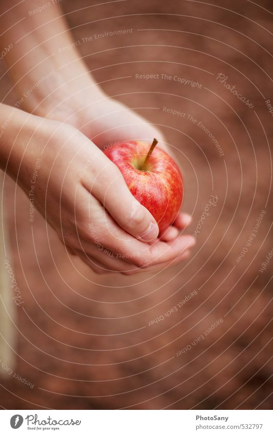 Is it Snow White? Apple Skin Hand Fingers 1 Human being Delicious Beautiful Brown Red Fairy tale Autumnal Colour photo Exterior shot Day Blur Bird's-eye view