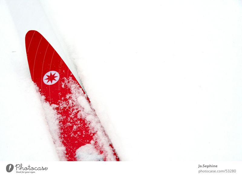 Red on White II Leisure and hobbies Cross country skiing Skiing Skis Sports Winter sports Winter vacation Seasons Snow Frost chill Neutral Background Day detail