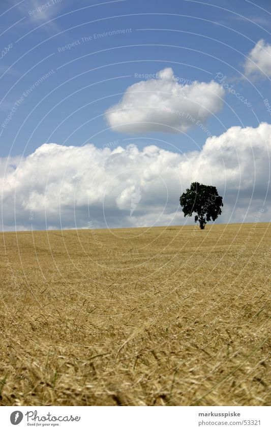 idyllic? Clouds Tree Field Wheat Oats Rye Agriculture Summer Sky Harvest Sun Grain