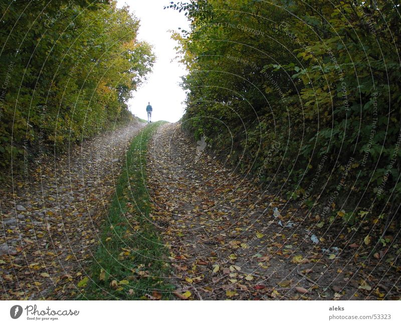 Human being Tree Leaf Forest Autumn Meadow Above Grass Lanes & trails Going To go for a walk Branch Tracks Footpath Forest road