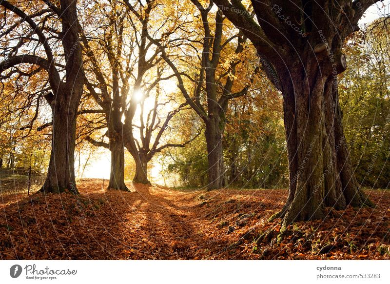 autumn Harmonious Relaxation Calm Trip Far-off places Hiking Environment Nature Landscape Sunlight Autumn Beautiful weather Tree Forest Lanes & trails