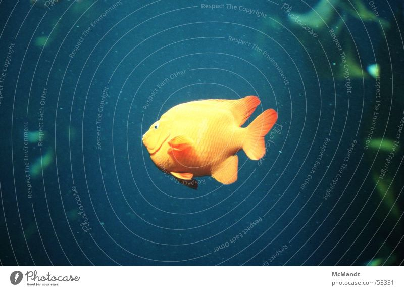 Water Ocean Blue Animal A Royalty Free Stock Photo From