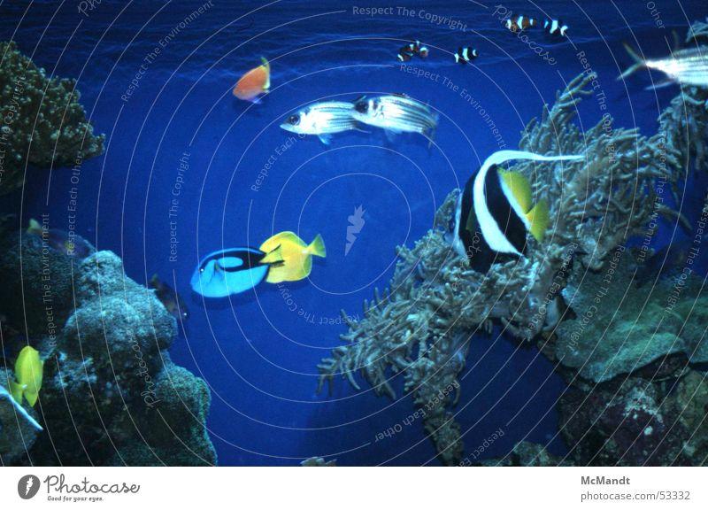 Water Ocean Blue Colour Fish USA Aquarium California Monterey