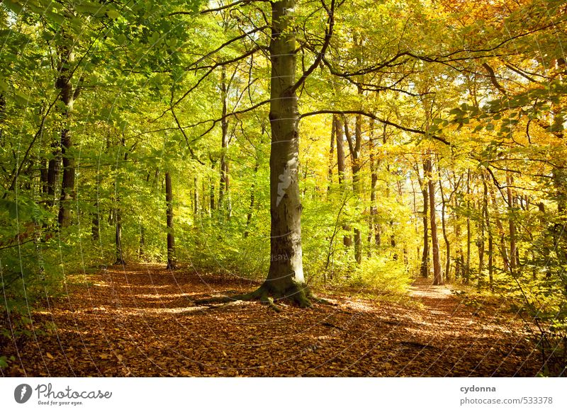 download calming forest picture - photo #19