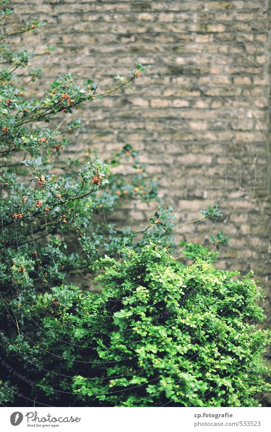 City Green Plant Summer Wall (building) Autumn Wall (barrier) Garden Brown Gloomy Bushes Foliage plant