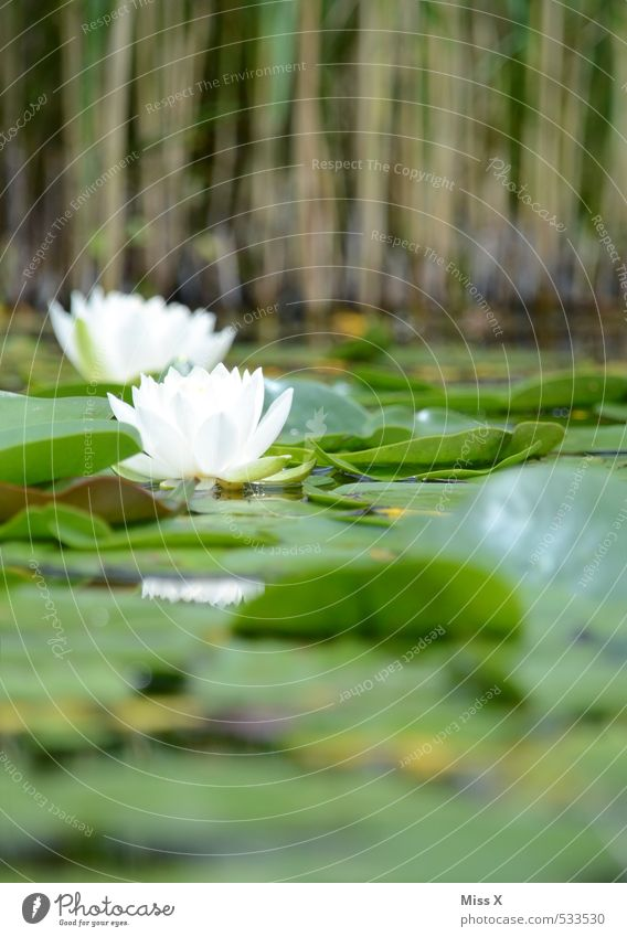 worm's-eye view Environment Nature Water Leaf Blossom Garden Bog Marsh Pond Blossoming Fragrance Swimming & Bathing Water lily Water lily leaf Water lily pond