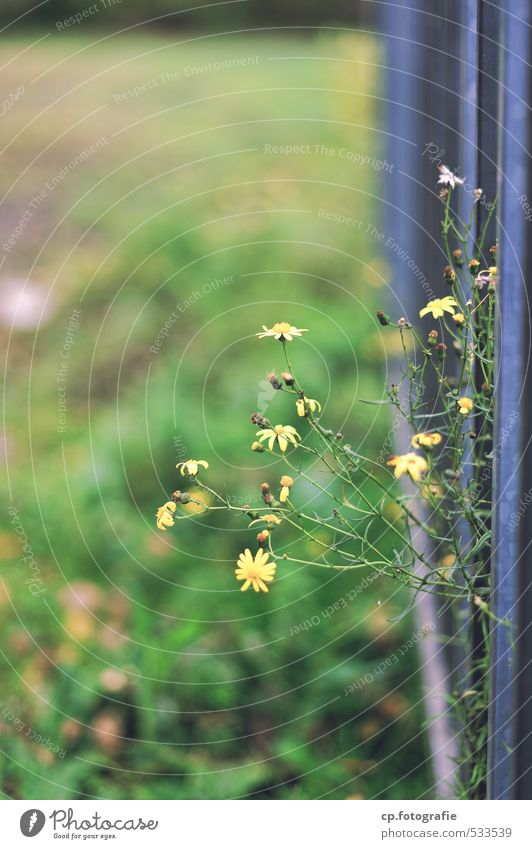 City Green Plant Summer Flower Autumn Natural Fence Gate