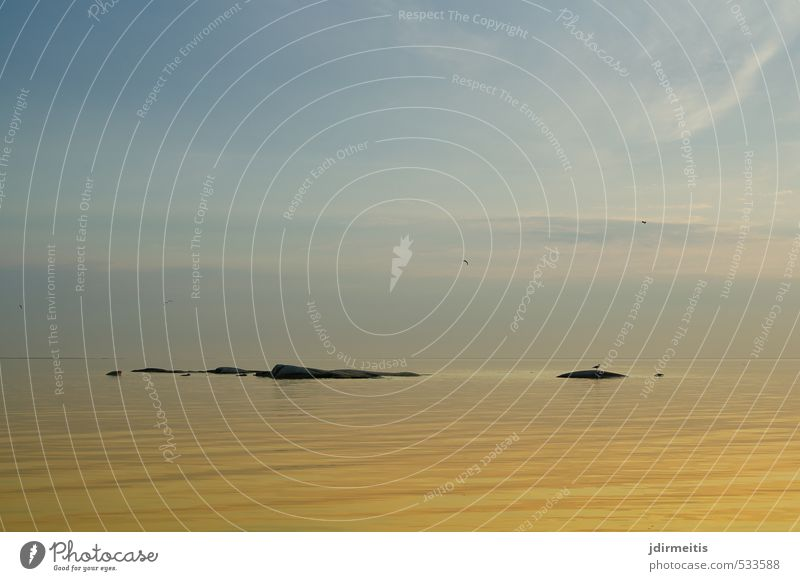islands Nature Landscape Water Sky Horizon Sunrise Sunset Summer Waves Ocean Lake Bird Sweden Seagull Rock Island Vänern lake Colour photo Exterior shot
