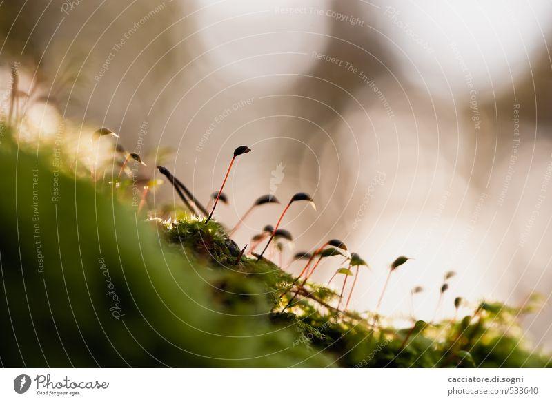 Plant Green Calm Environment Blossom Autumn Lanes & trails Small Freedom Brown Dream Idyll Esthetic Joie de vivre (Vitality) Uniqueness Beautiful weather