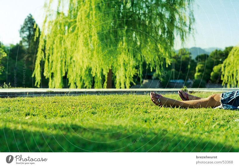 Flip-flops in the park Sandal Dress Woman Summer Green Weeping willow Sunset Meadow Grass Argentina Denim skirt Vacation & Travel Calm Relaxation Goof off Legs