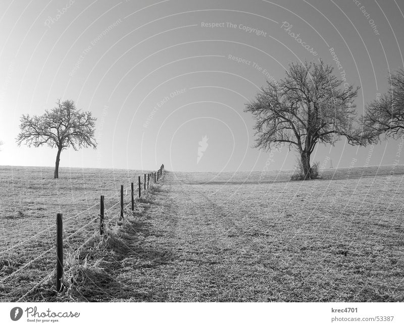On both sides Tree Fence Pasture fence Meadow Divide Sun Winter Black & white photo Hoar frost