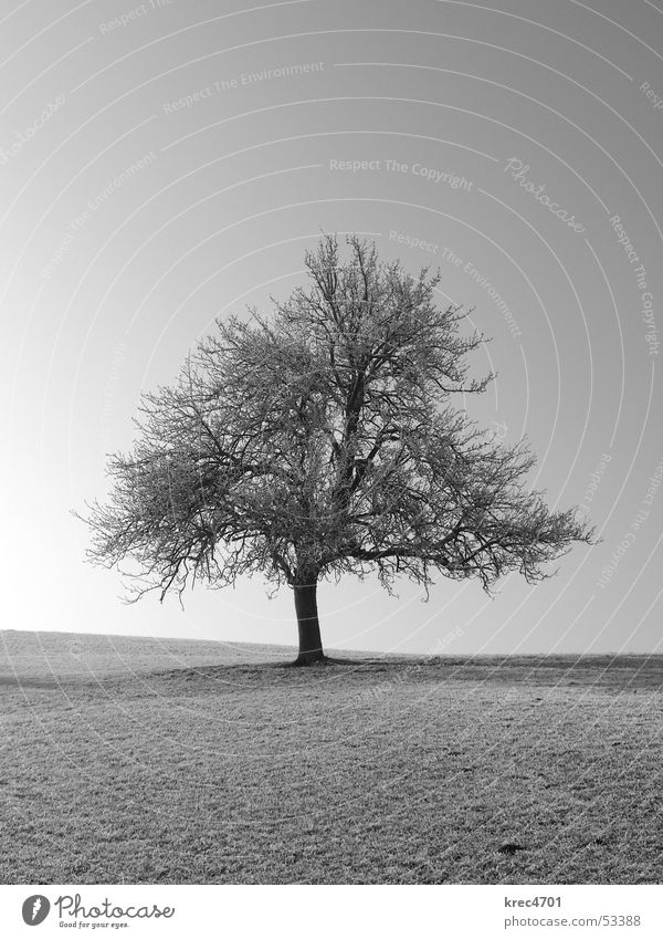 One individual Tree Meadow Individual Sun Winter Pasture Loneliness Black & white photo Hoar frost