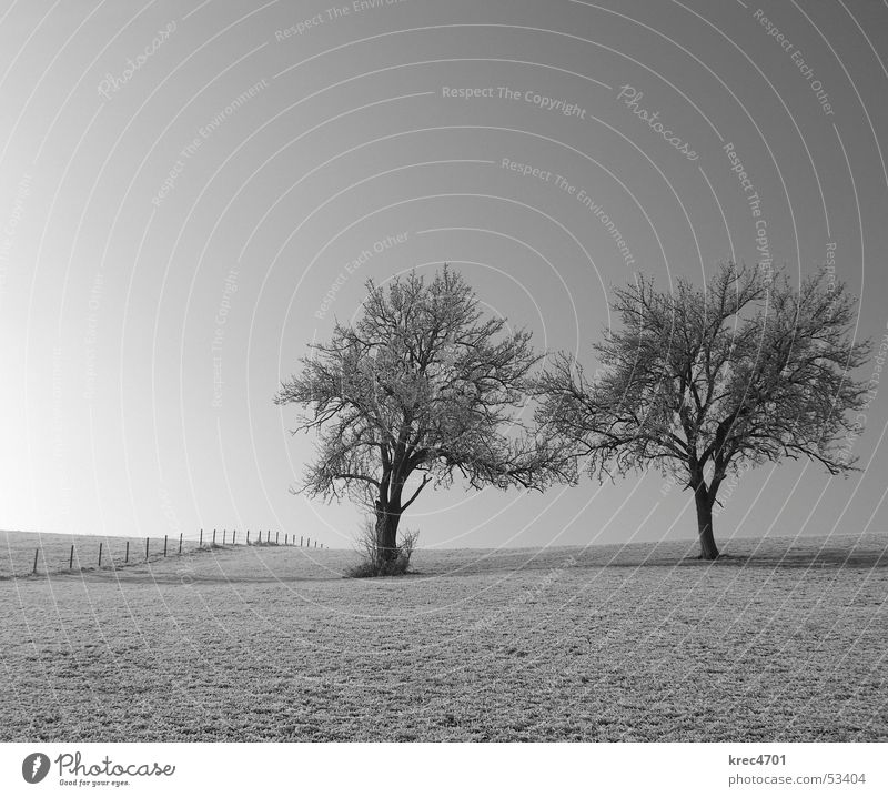 t(w)o - gether Tree Meadow Fence Pasture fence Loneliness Individual Black & white photo Free In pairs