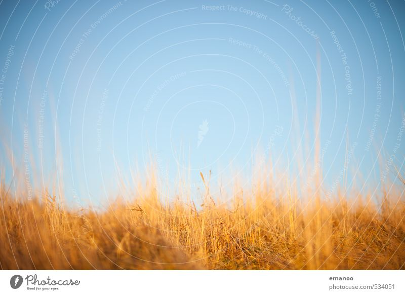 autumn colours Nature Landscape Plant Air Sky Horizon Autumn Weather Beautiful weather Grass Meadow Growth Soft Blue Brown Yellow Background picture