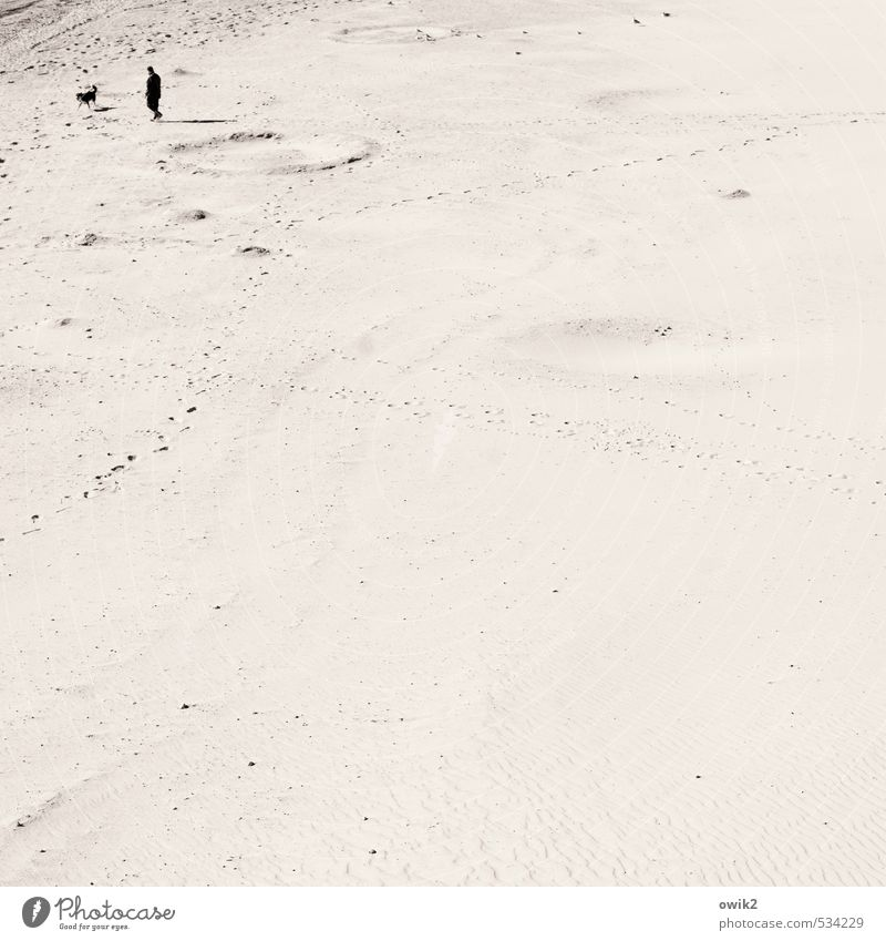 walk Man Adults 1 Human being Environment Nature Landscape Sand Climate Beautiful weather Coast Beach Dog Animal Going To enjoy Large Infinity Bright Sympathy