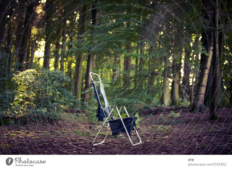 peacefulness of the forest Camping Chair Deckchair Camping chair Folding chair Environment Nature Plant Summer Beautiful weather Tree Bushes Forest Metal Calm
