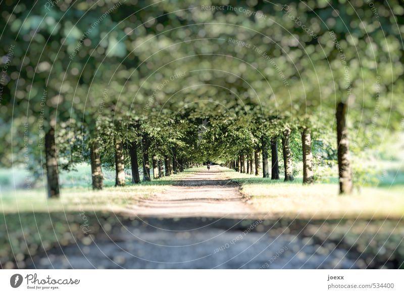 Nature Beautiful Green Tree Lanes & trails Beautiful weather