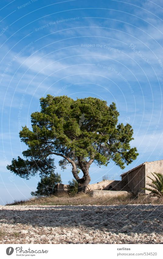 Sky Nature Vacation & Travel Blue Green Tree Loneliness Calm Warmth Building Beautiful weather Esthetic Majorca Mediterranean Ruin Vacation home