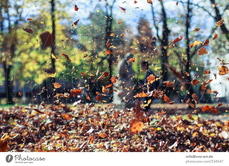 autumn flight Leisure and hobbies Garden Environment Nature Sun Sunlight Autumn Tree Leaf Park Forest Brown Yellow Autumnal Flying Hover To fall Colour photo
