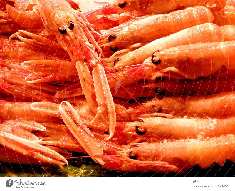 frutti di mare Seafood Animal Shrimps Shellfish Red Yellow Markets Nutrition Orange Fish Eyes Multiple Water