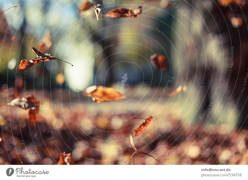 In autumn Environment Nature Autumn Plant Tree Leaf Garden Park Field Forest Yellow Gold Orange Trap Flying Hover Seasons Colour photo Exterior shot Deserted