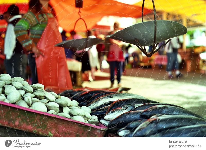Sun Red Summer Bright Orange Fresh Fish Merchant Stand Food Markets Crate Scale Workwear Seafood Weigh