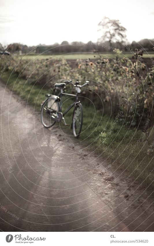 who rests rusts Trip Cycling Bicycle Environment Nature Landscape Sunlight Summer Autumn Beautiful weather Grass Bushes Meadow Field Transport