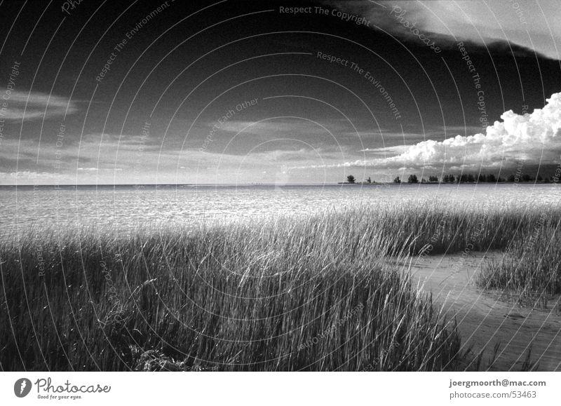 Water Sky Ocean Beach Clouds Grass Sand Landscape Waves Free USA Russia Dramatic Florida Rough St. Petersburgh