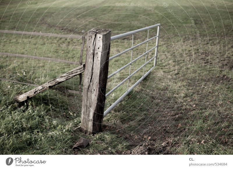 rural exodus Environment Nature Landscape Earth Grass Meadow Field Brown Green Gate Fold Fence Fence post Border Open Cattle Pasture Pasture fence Colour photo