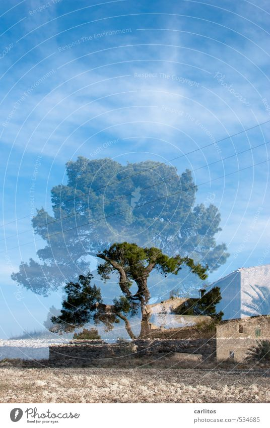 HAPPY BIRTHDAY PHOTOCASE Elements Earth Air Sky Warmth Tree Field Esthetic Stone pine Vacation home Country house Double exposure Mediterranean Majorca